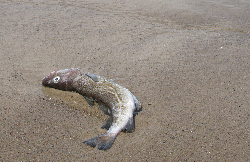 Thrown Away: How Illegal Discarding in the Baltic Sea is Failing EU Fisheries and Citizens