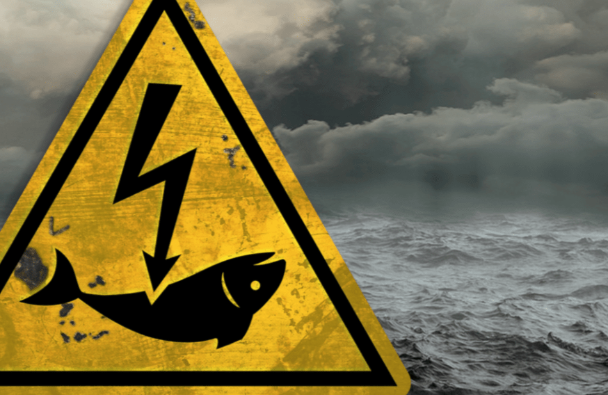 Briefing: Electric 'Pulse' Fishing: Why it Should be Banned