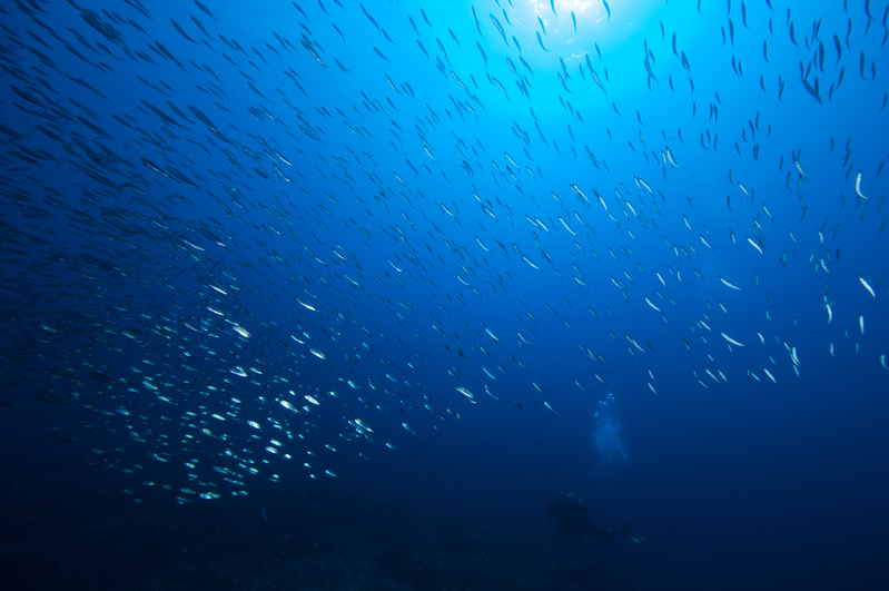 Shoal of Fish in the Mediterranean Sea © Greenpeace / Gavin Parsons