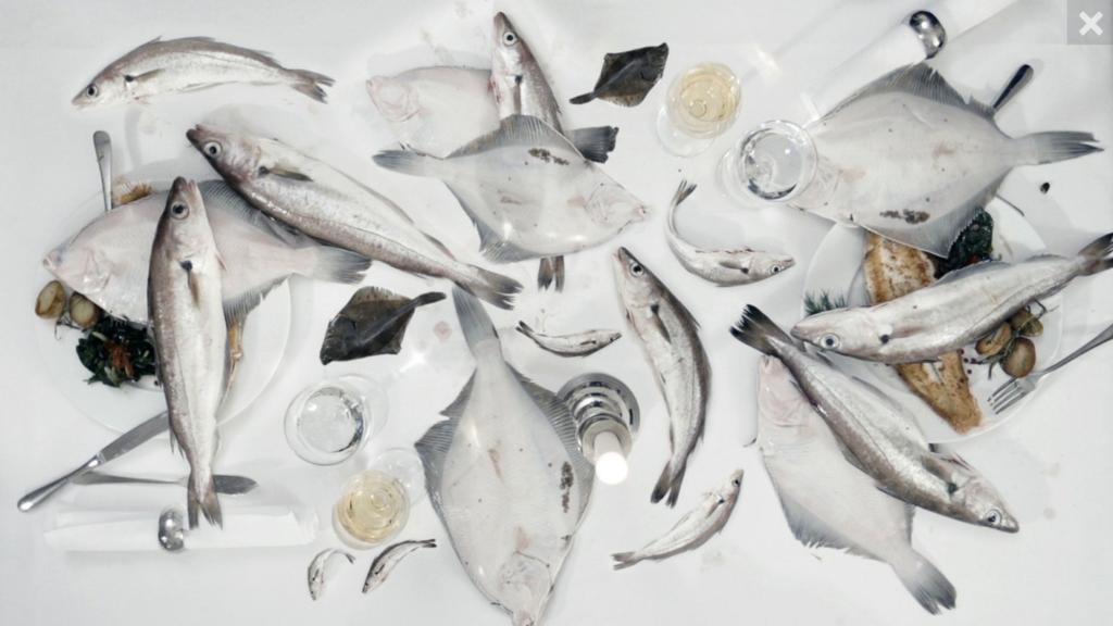 """Zum """"Tag der Fische"""" – Deutsche Umwelthilfe und Our Fish fordern verantwortungsvollen Umgang mit unserem Fisch"""