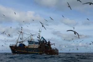 Seagulls Feed on By-catch From TrawlerZeemeeuwen voeden zich met Bijvangst van Trawler