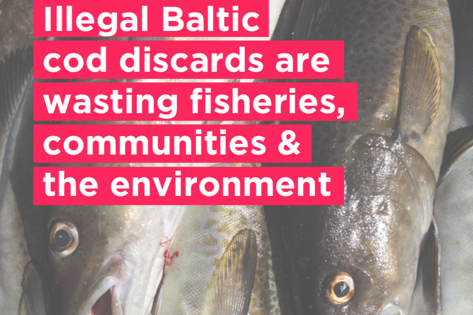 Our Fish Report Illegal Baltic cod discards crop
