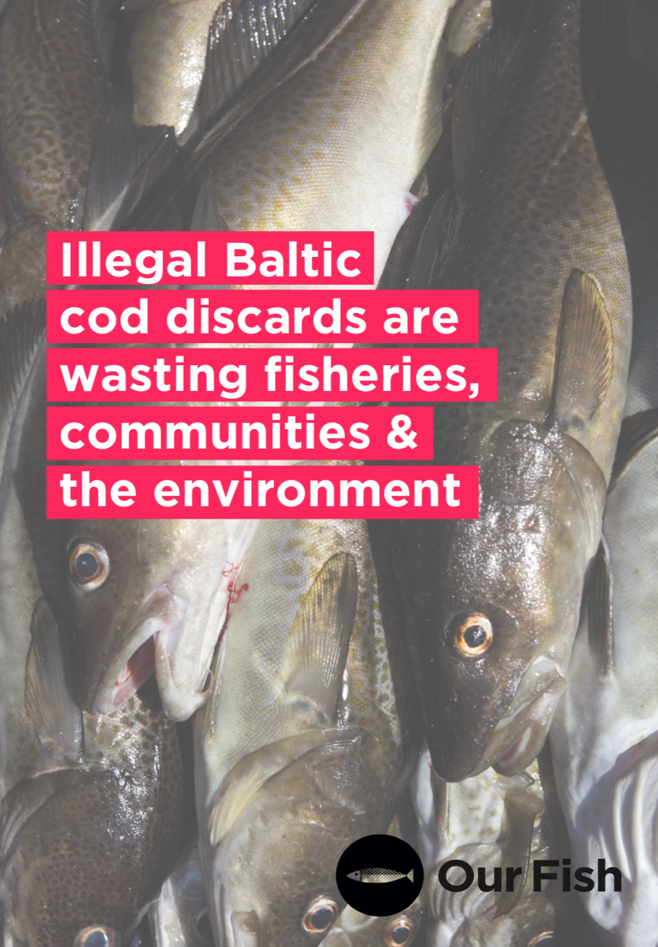 Illegal Baltic cod discards are wasting fisheries, communities & the environment