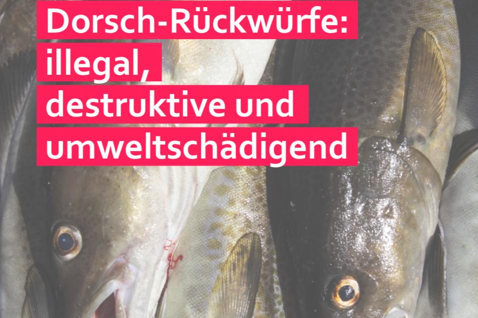 Zu viele Dorsche über Bord – Deutsche Umwelthilfe und Our Fish fordern umfassende Kontrollen in der Ostsee