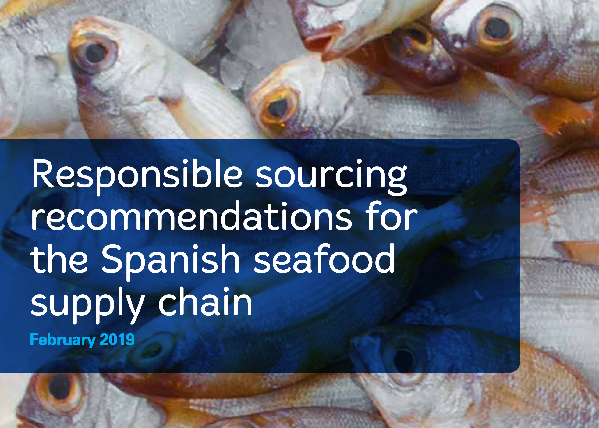 New roadmap targets responsible sourcing improvements in Spanish seafood industry
