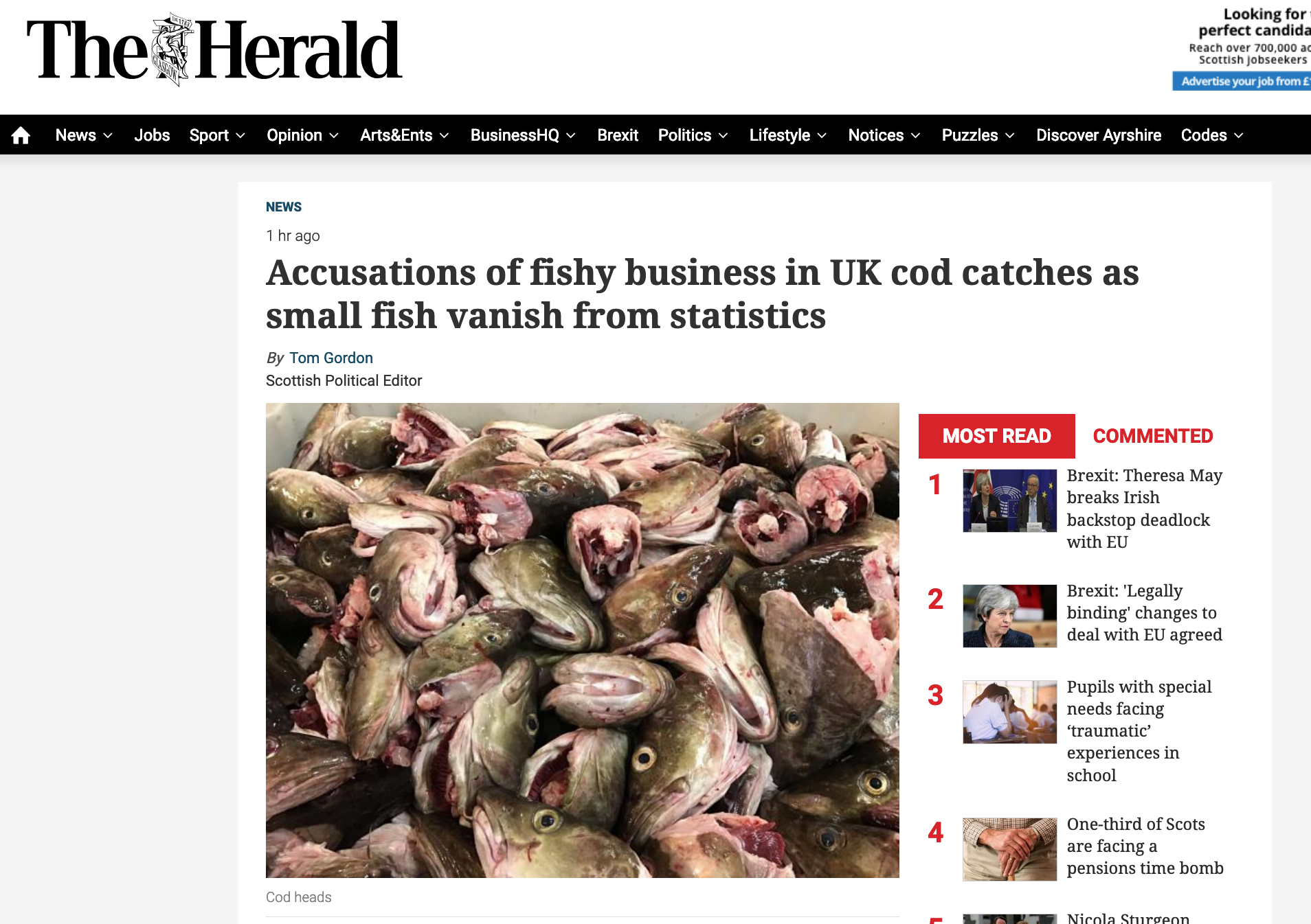 Accusations of fishy business in UK cod catches as small fish vanish from statistics