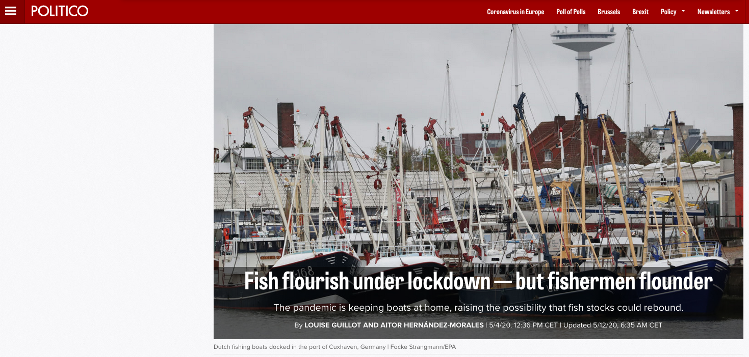 Fish flourish under lockdown — but fishermen flounder