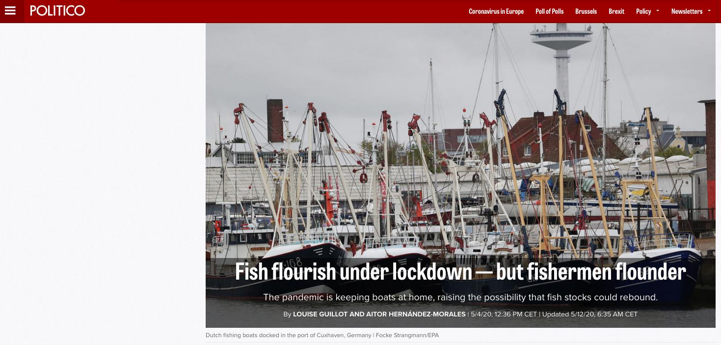 Fish flourish under lockdown — but fishermen flounder