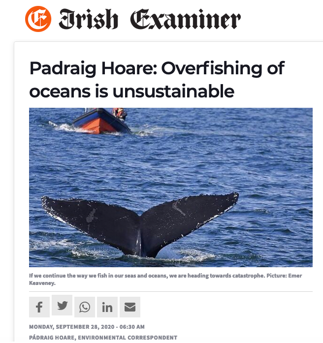 Irish Examiner: Overfishing of oceans is unsustainable