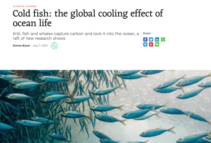 Cold fish: the global cooling effect of ocean life